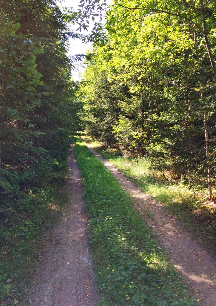 löpning-komma-igång-skog-natur