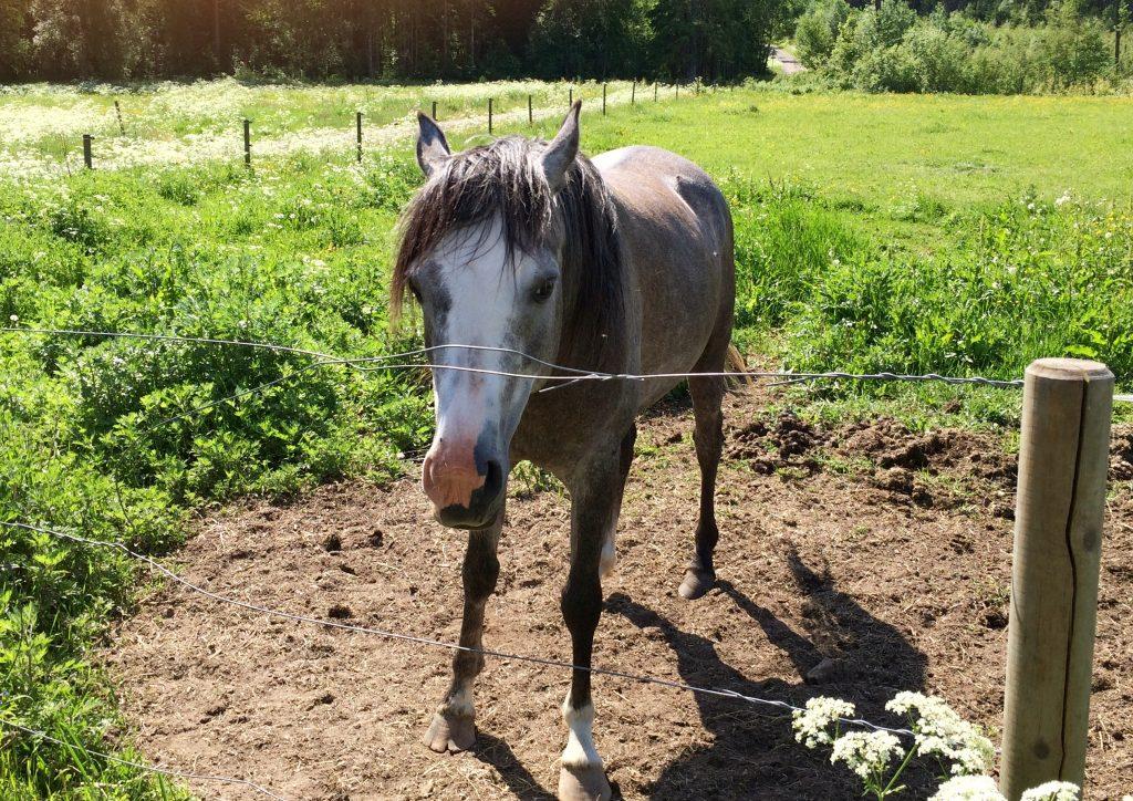löpning-komma-igång-häst-hage