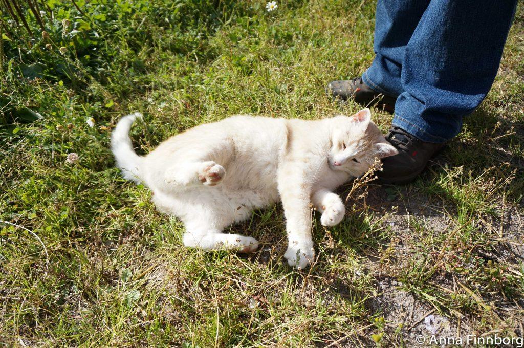 ostbiten-katt